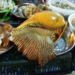 墨中巨型海螺