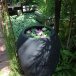 水缸养莲花