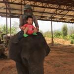 姆二骑大象