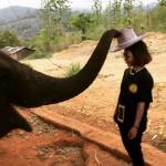 大象戴帽子